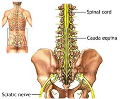 Sciatica pain relief with massage therapy