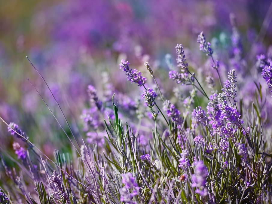 Demystifying Aromatherapy Elements Massage Tempe