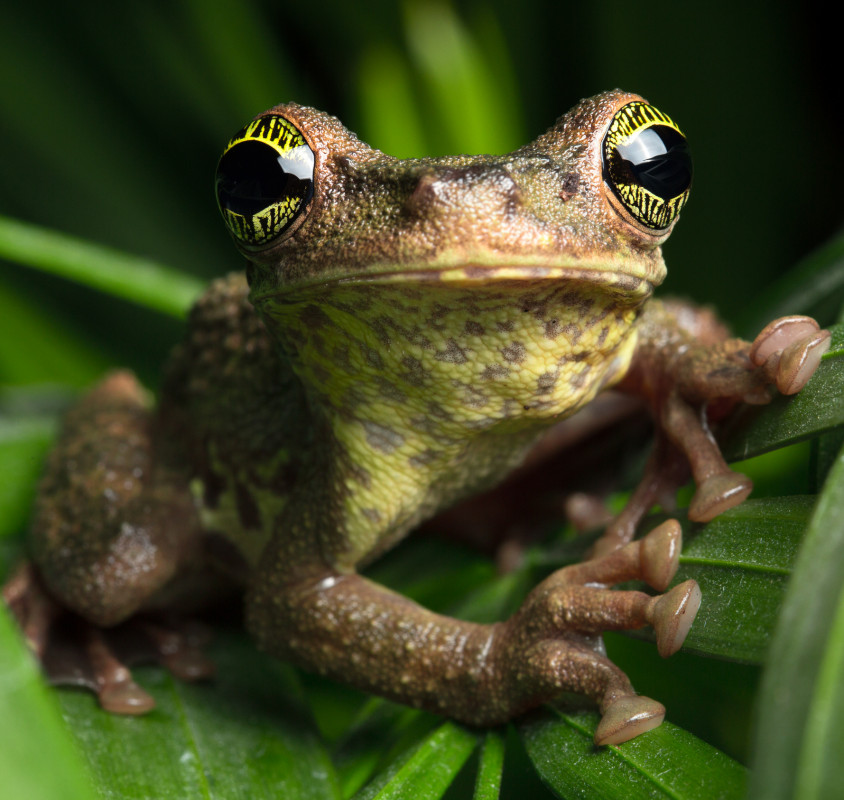 how-to-eat-the-frog-first-fixing-procrastination