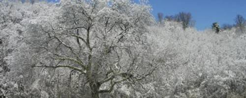 Banner Image for Snow Storm Special Limited Time Offer!