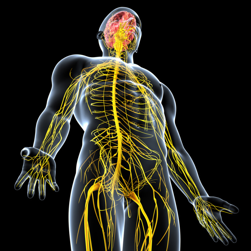 Banner Image for Massage and Your Nervous System