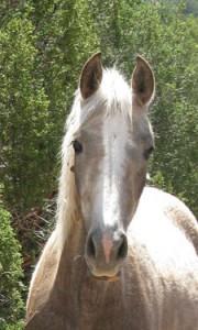 a horse Logo