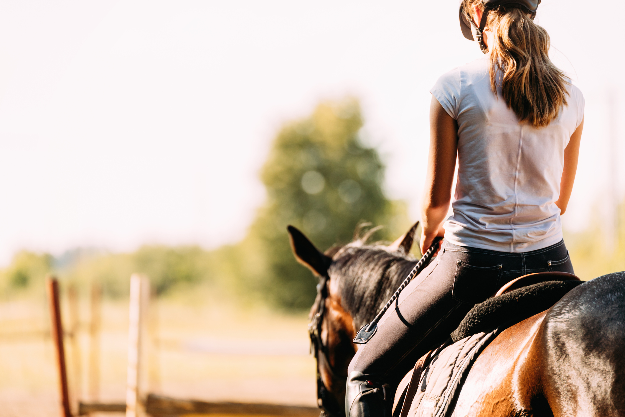 The Benefits Of Massage For Horseback Riders Elements