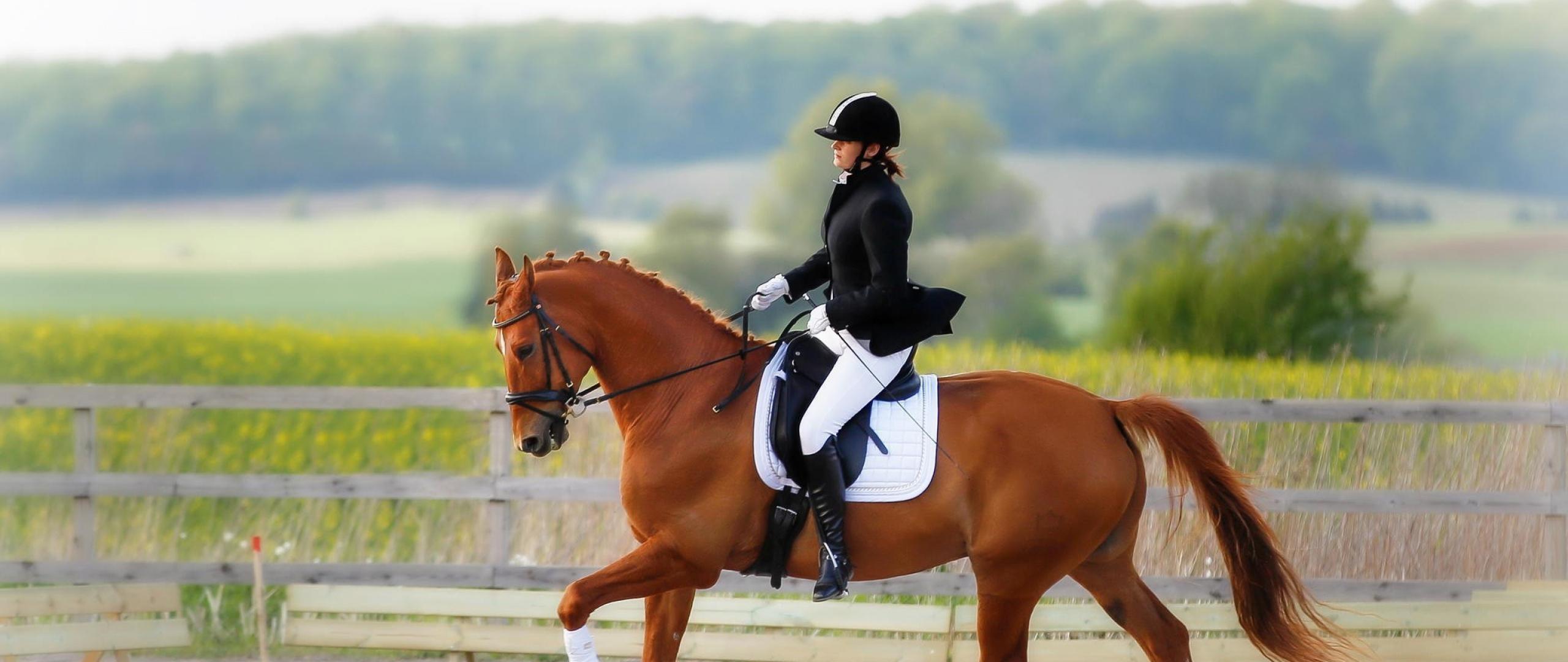 ставки спорт конный shelby на