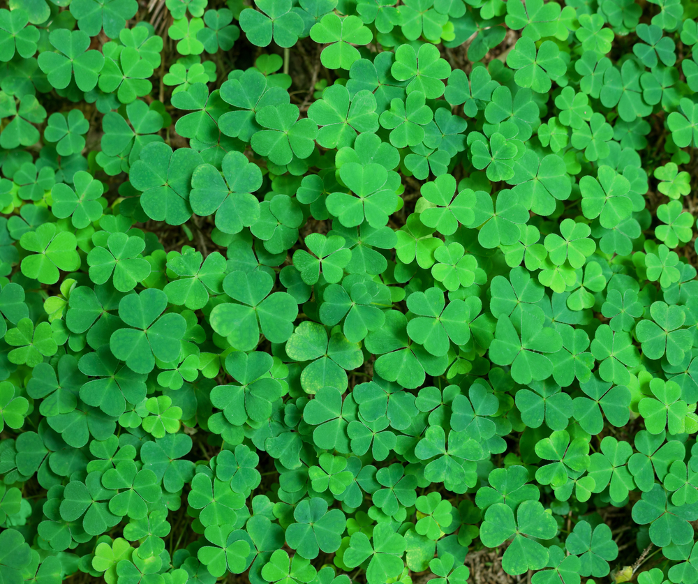 Massage therapy self care taking care of yourself healthy habits luck of the irish lucky